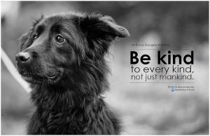 bekind-flickr-com