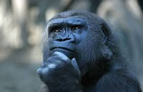 Gorilla Thinking by patriziasoliani on flickr